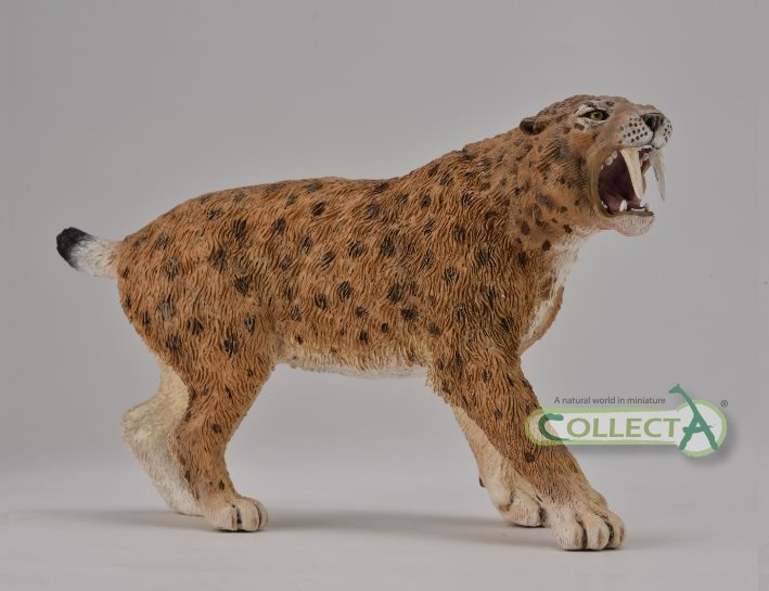 smilodon_collecta_2015.jpg