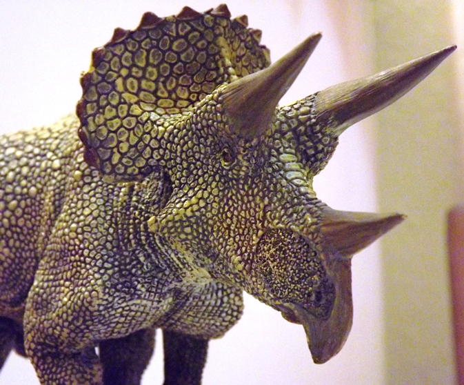 Triceratops model favorite