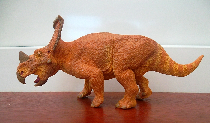 This Vagaceratops is one of  Vagaceratops