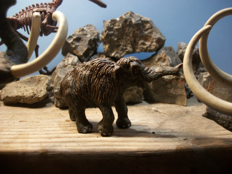If The Atudes Of Extant Kin Is Any Indication Mammoths Were Usually Peaceful Browsers However During Mating Season Male Elephants Can Go