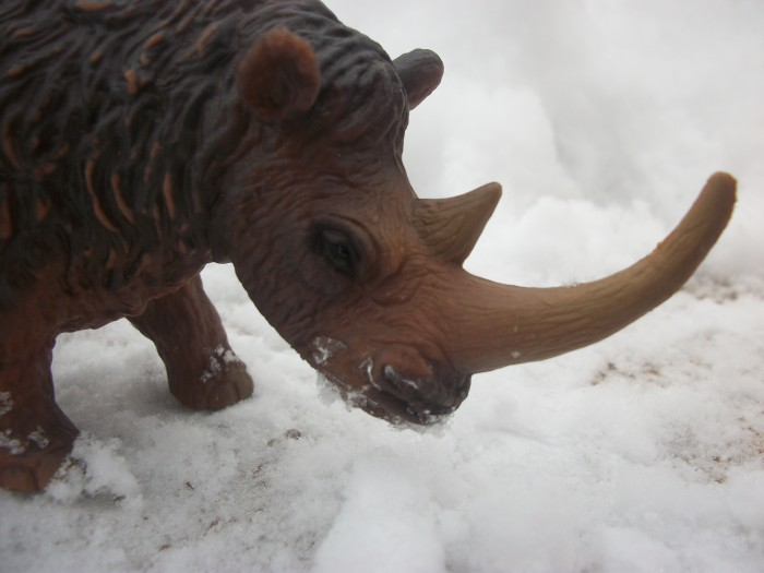 woolly rhinoceros 2