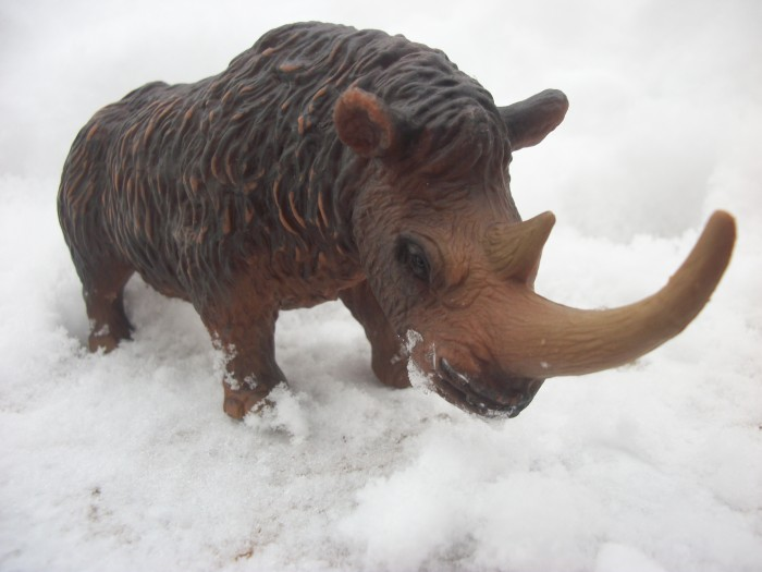 woolly rhinoceros 3