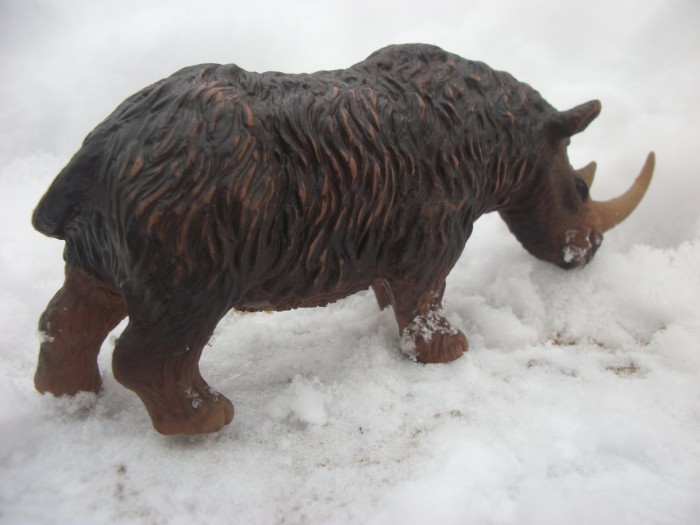 woolly rhinoceros 4